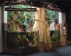 Large tree trunk made of concrete in an Amazon Rain Forest display.