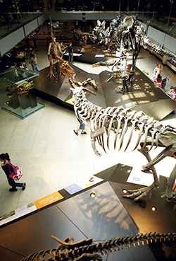 An aerial look at the dinosaur display at the Natural History Museum.